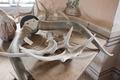 Horn från vattenbuffel - Skoklosters slott - 95020.tif