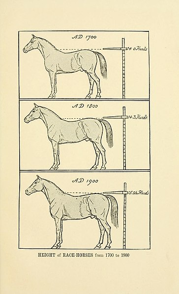 File:Horse-breeding in England and India - and army horses abroad (1906) (14580159299).jpg