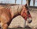 Horse headshot 4404.jpg