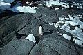 Horseshoe I inquisitive penguin.jpg