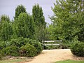 Howitt Park Bairsdale - panoramio.jpg