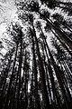 Huron Natural Area - Kitchener, Ontario 02.jpg