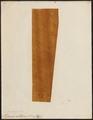 Hydrophis colubrina - 1700-1880 - Print - Iconographia Zoologica - Special Collections University of Amsterdam - UBA01 IZ11800149.tif