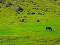 Iceland - panoramio (22).jpg
