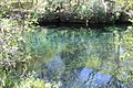 Ichetucknee River 7.jpg