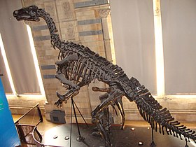 Iguanodon bernissartensis (replica).001 - Natural History Museum of London.JPG