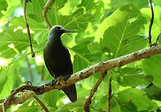 Ile Aride - Oiseau (12).JPG