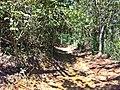 Ilha Grande - panoramio (90).jpg