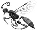 Imago of Ichneumoninae spp (female).png