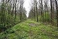 In Plungar Wood - geograph.org.uk - 156760.jpg