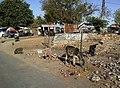 Inde Rajasthan Pushkar Rue Vache Cochons - panoramio.jpg