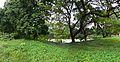 Indian Botanic Garden - Howrah 2013-10-27 3807-3810.JPG