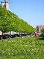 Ingerslevs Boulevard (maj) 02.jpg