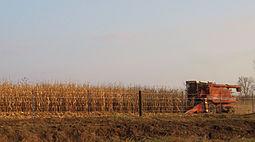 Iowa harvest 2009