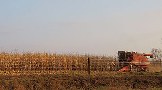 Jones County, Iowa - Harvesting corn during the record 2009 season in Jones County.