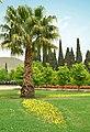 Iran - Shiraz - Sa'adi Garden - panoramio.jpg