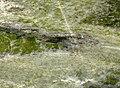 Irish Green Marble (Connemara Marble Formation, Neoproterozoic; Ordovician metamorphism; Galway, Ireland) 4 (33202900903).jpg