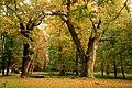 Ivenacker Eichen im Herbst.jpg