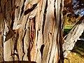 Jack Nicklaus Park (formerly Parkway Park) (25368613599).jpg