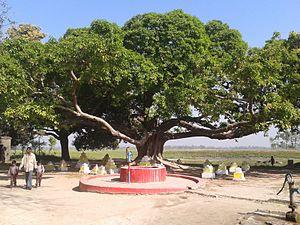 Areraj - jalpa bhwani