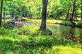 Japan - Tochigi, lake Chuzenji Primula japonica 2016 3.jpg