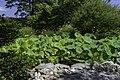 Japanese Garden NBG 4 LR.jpg