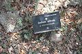 Jardí Botànic de Sóller IMG 4672.JPG