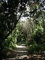 Jardín canario 25.JPG