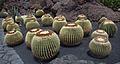 Jardín de Cactus - Lanzarote - J10.jpg