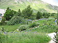 Jardin botanique alpin du Lautaret.jpg
