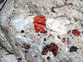 Jasper-quartz pebble conglomerate (Lorrain Formation, Paleoproterozoic, ~2.3 Ga; Ottertail Lake Northeast roadcut, near Bruce Mines, Ontario, Canada) 56 (32766162847).jpg