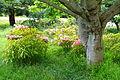 John McLaren Memorial Rhododendron Dell - Golden Gate Park, San Francisco, CA - DSC05366.JPG