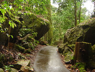 Queensland tropical rain forests - Typical scenery in the Wet Tropics, a walking path with fauna at Josephine Falls, located near Innisfail. Foliage is thin in the photograph due to Cyclone Larry's effects.