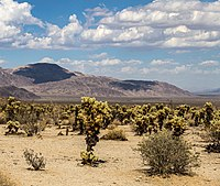 Joshua Tree National Park (California, USA) -- 2012 -- 5663 (crop).jpg
