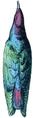 Juida (Millot-1907).png