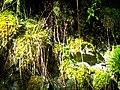 June Grüne Hölle Bergwälder Glottertal Moose ^ Flechten - Mythos Black Forest Photography 2013 green mountain forest - panoramio.jpg