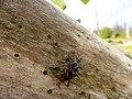 Käfer bei der Paarung.jpg
