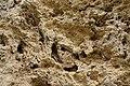 Kalktuff-Barre Karst-Sediment Baeratal Schwaebische-Alb.jpg