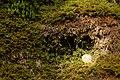 Kalktuff Moos-tropfnass Rinnenwald Schwaebische-Alb.jpg