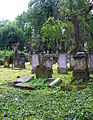 Kamienna Góra, cmentarz żydowskiPICT6597.JPG
