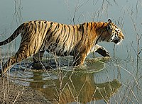 Karmazari Pench National Park 2.jpg