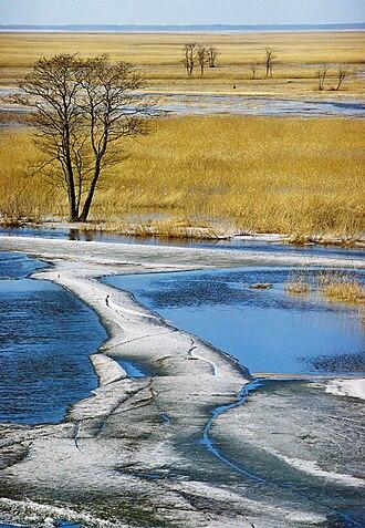 Flood-meadow - Kasari flood-meadow in early spring. Matsalu National Park, Estonia.