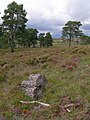 Kingston Great Common, New Forest - geograph.org.uk - 501181.jpg