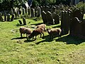 Kirk Michael churchyard - geograph.org.uk - 481865.jpg