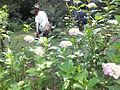 Kobe Municipal Arboretum in 2013-6-22 No,50.JPG