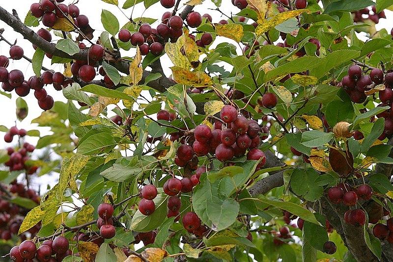 입술의 열매