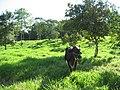 Kosñipata, paucartambo, cusco, peru - panoramio (2).jpg