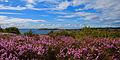 Kosteröarna heather.jpg