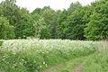 Kreis Pinneberg, Naturschutzgebiet Liether Kalkgrube 07.jpg