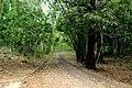 LAHADU - panoramio.jpg